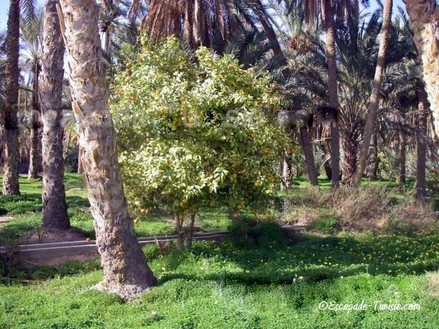 Coup de gueule : La sécurité / insécurité dans le Sud tunisien en 5 points