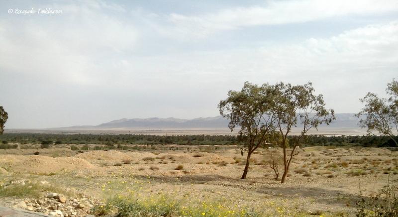 El Guettar, une oasis entre chott et montagne