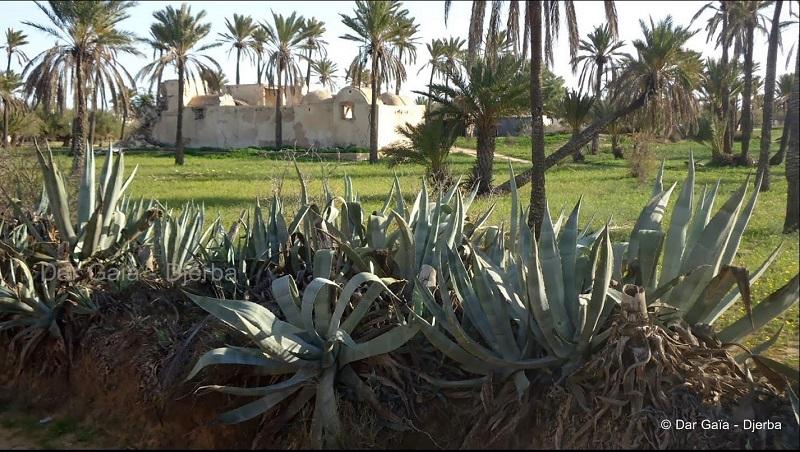 Djerba : côté pile ou côté face ?
