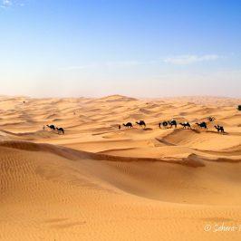 12 jours à pied dans le désert tunisien – Reportage