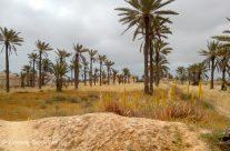 Djerba, vu de l'intérieur